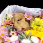 ペットの葬儀