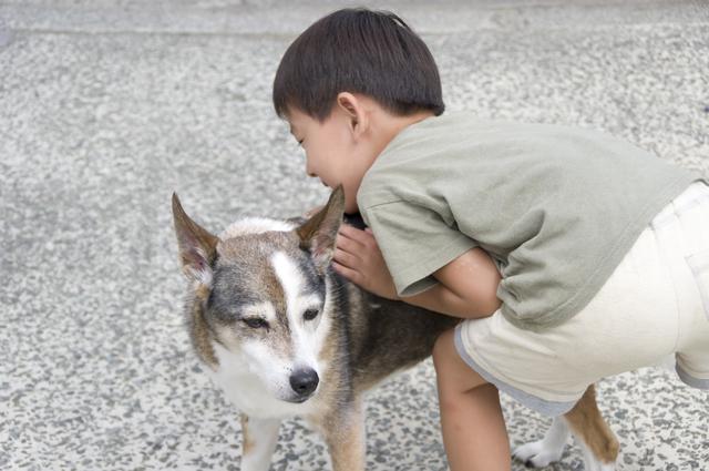 ペットの犬と遊ぶ男の子