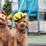 帽子をかぶった2匹の犬