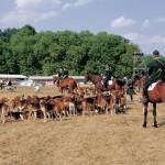 犬30匹と馬3頭