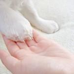 お手をする犬の足