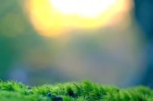 太陽光発電へfax広告で新規集客営業