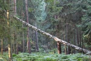 林業へfax広告で新規集客営業